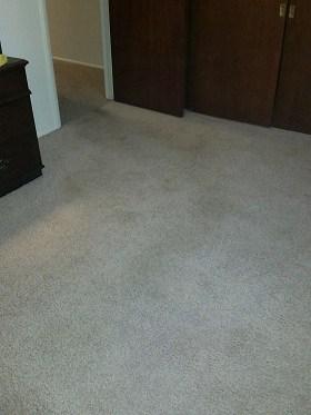 carpet cleanup